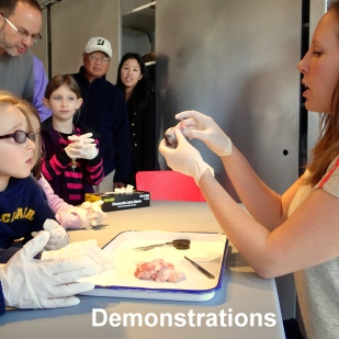 Helix educators may lead demonstrations for your students, such as dissections, botanical investigations, philosophical discussions, or explorations with our hand-held video microscope. Please let us know what you're studying at school, and we'll work with you to choose the right fit for your students.