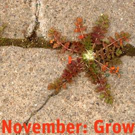 grow2Nov
